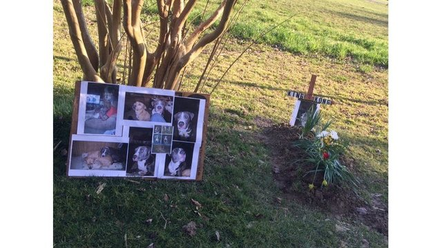 Family wants justice after deputy shoots, kills pet pit bull