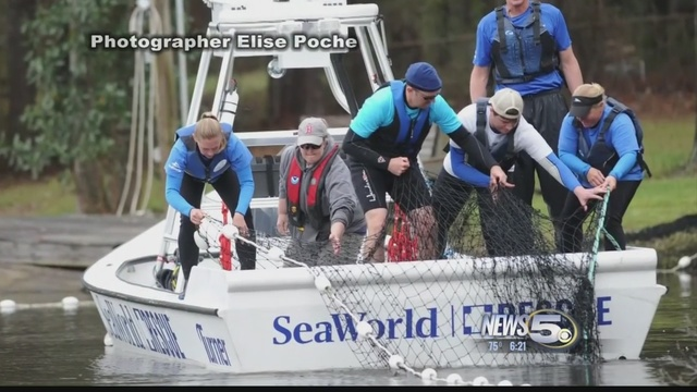 Dolphin rescued from fresh-water lake off Gulf Coast