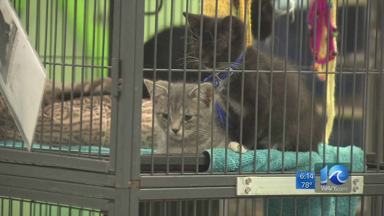 Clear The Shelters national initiative ends today