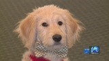Comforting Families: Williamsburg funeral home introduces emotional support dog