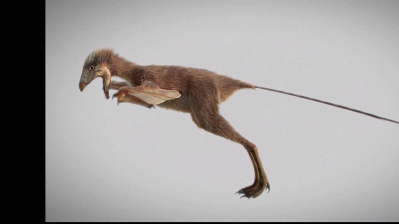Tiny dinosaur with bat-like wings discovered in China - WAVY-TV